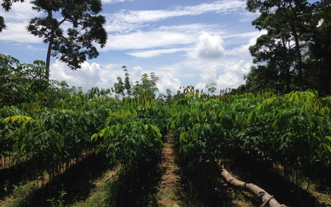 Reciente visita a reforestaciones en el Cerro San Gil (Guatemala)