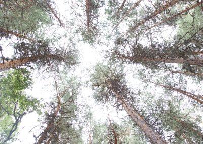 Inventarios para la caracterización de combustibles forestales con LiDAR
