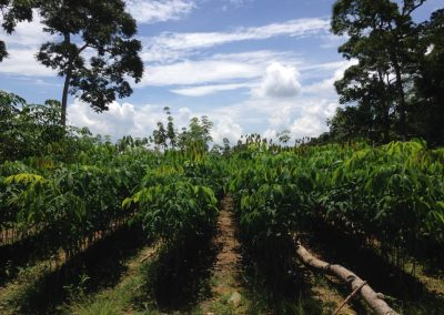 Finalizado proyecto de AGRESTA en Guatemala