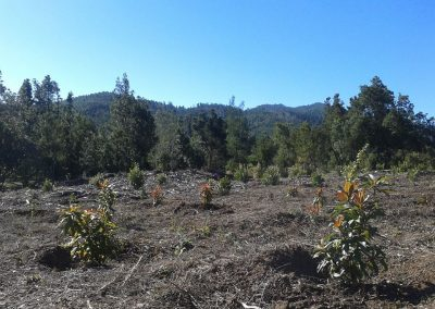 Proyecto de repoblación por compensación huella de carbono del Tenerife Walking Festival (2015 y 2016)