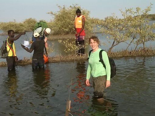 Forestación y reforestación de Manglares en Senegal bajo Standares MDL y VCS