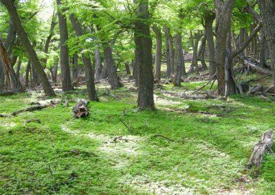 Carbonia : conservation et amélioration des forêts en tant que puits de carbone