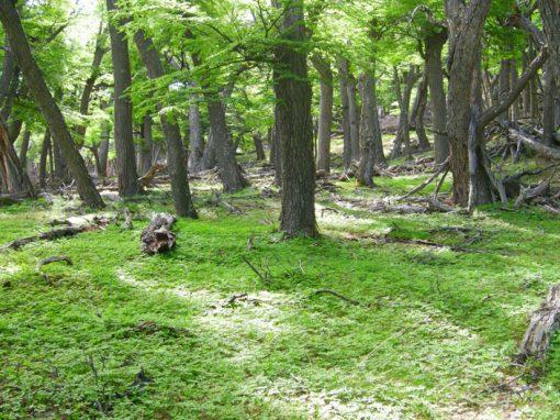 Carbonia: conservación y mejora de los bosques como sumideros de carbono