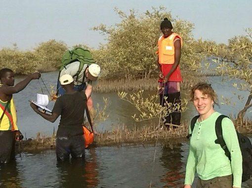 Boisement et reboisement des Mangroves au Sénégal conformément aux standards MDP et VCS
