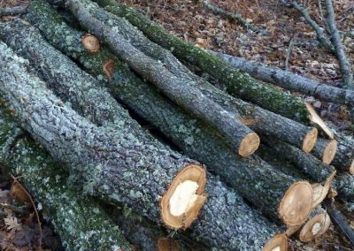 Supply of firewood to local residents through shoot selection in rebollo oak