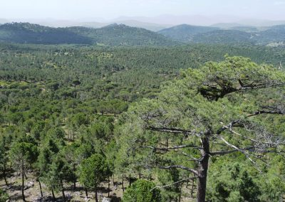 2nd Review of Management Plan for the Group of Forests of Hoyo de Pinares (Ávila)