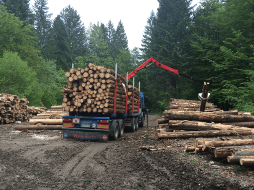 SIMWOOD (Movilización sostenible e innovadora de madera)