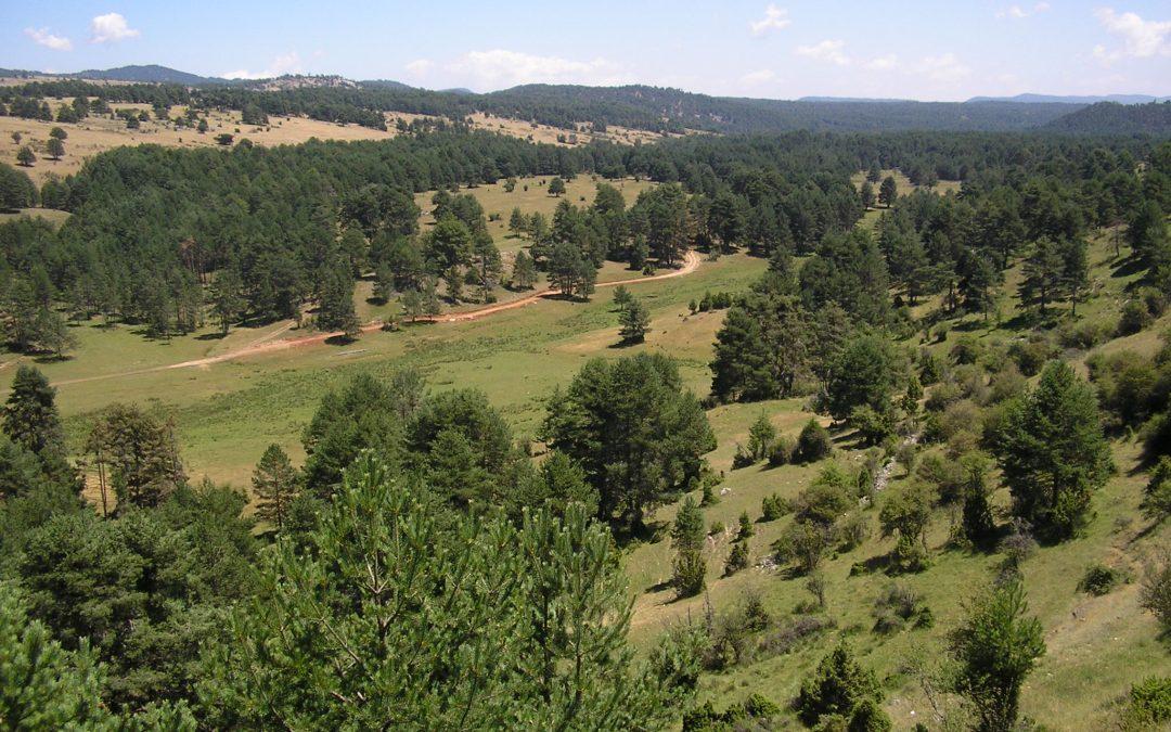 Nuevas ayudas al sector forestal en Castilla-La Mancha