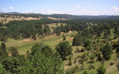 ayudas al sector forestal en Castilla-La Mancha