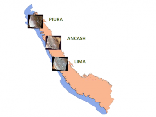 Production of basemaps and maps of forest loss in the coast and mountains of Peru