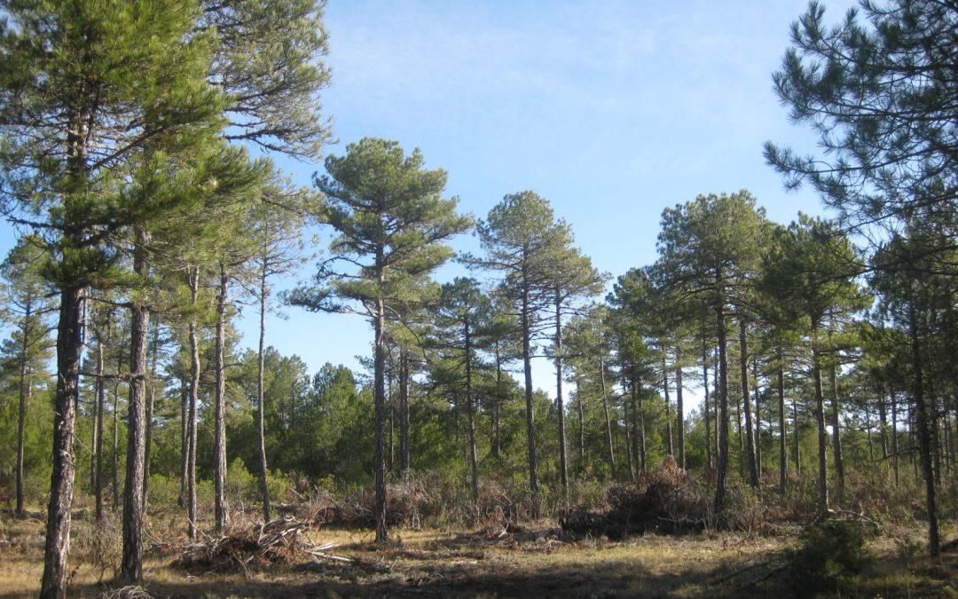 Nuevas ayudas al sector forestal en Comunidad Valenciana, Navarra y Castilla La-Mancha