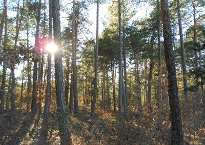 Creación del Grupo Operativo Supra-autonómico de Bosques Productores de Madera de Calidad  SiGCa