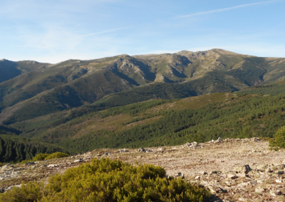 Convocadas ayudas al sector forestal en Castilla-La Mancha
