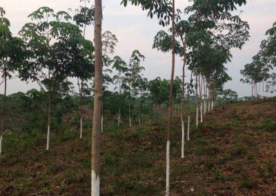 Consultoría para la validación y verificación bajo el estándar VCS de un proyecto de reforestación en Guatemala (Cerro San Gil)