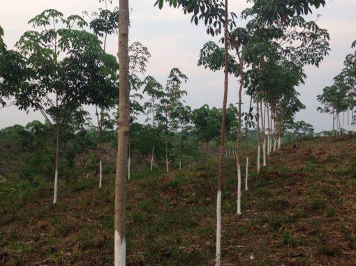 Conseil pour la validation et la vérification d'un projet de reboisement au Guatemala (Cerro San Gil) conformément au standard VCS