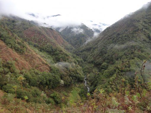 Appui technique pour le suivi et la vérification du projet  MDP B/R : Séquestration du carbone dans les petites et moyennes exploitations dans la région de Brunca, Costa Rica