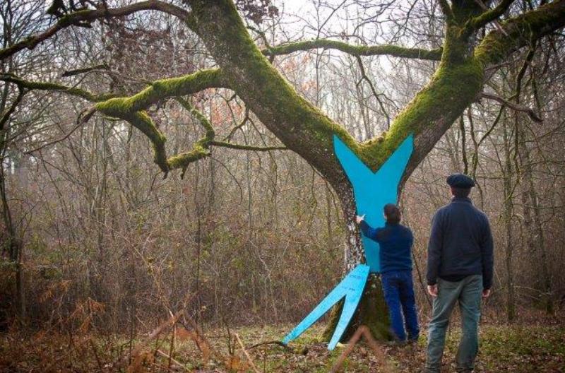 """Innovación y mundo forestal (1): el proyecto de construcción del ballenero """"San Juan"""""""