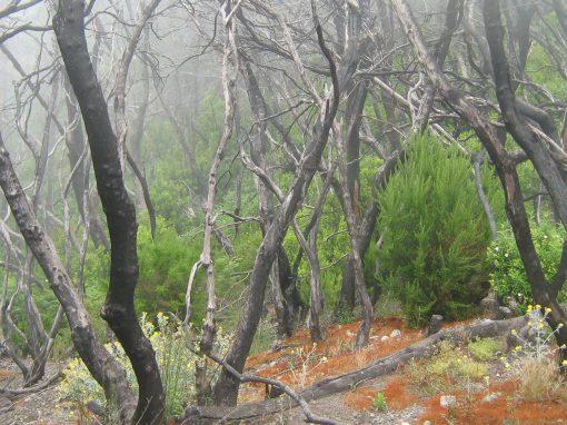 Seguimiento posincendio de la vegetación en el PN de Garajonay mediante sensores remotos