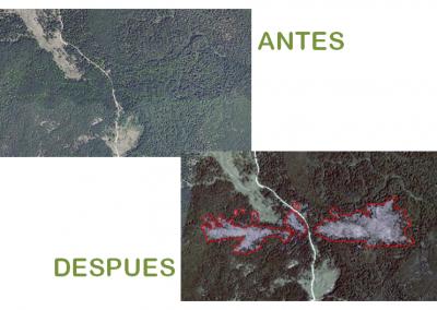 Rápida detección y cuantificación del derribo del hayedo en la Sierra de Entzia con imagen satelital y FORESTMAP